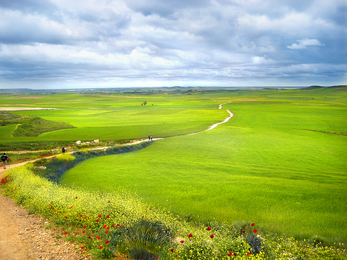 Camino-de-Santiago-green-fields